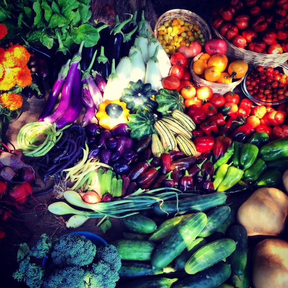 Swag Project- food harvest.jpg