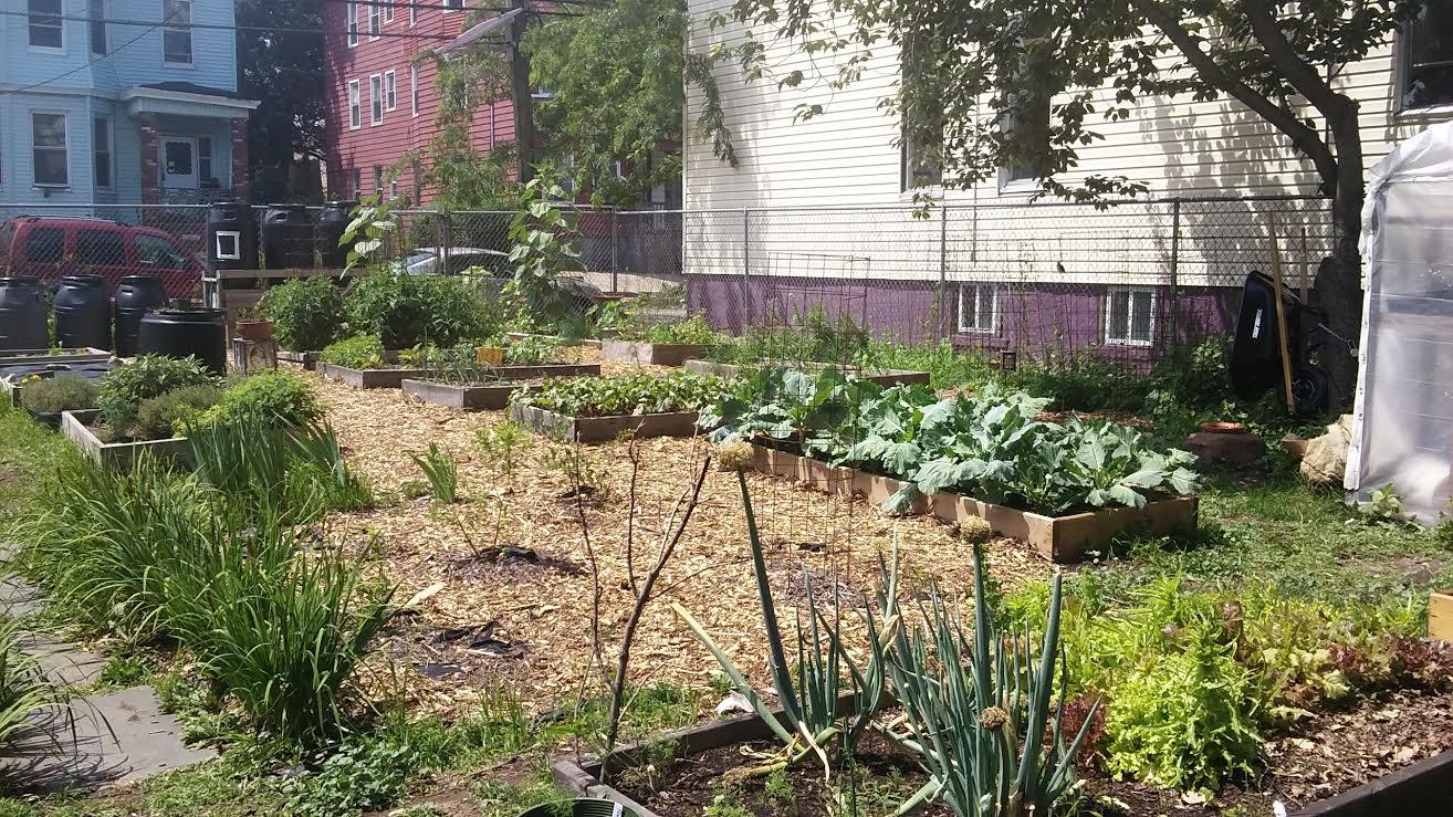 The Green Community Farm-1.jpg