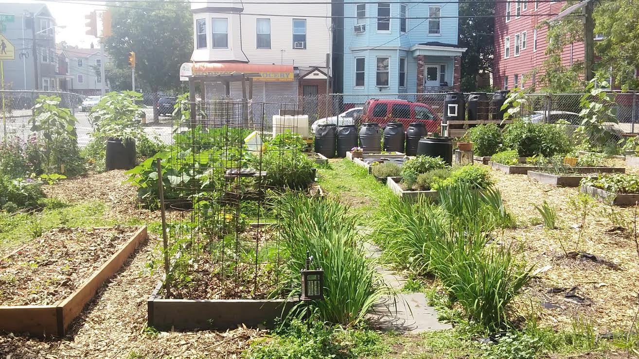 The Green Community Farm-2.jpg
