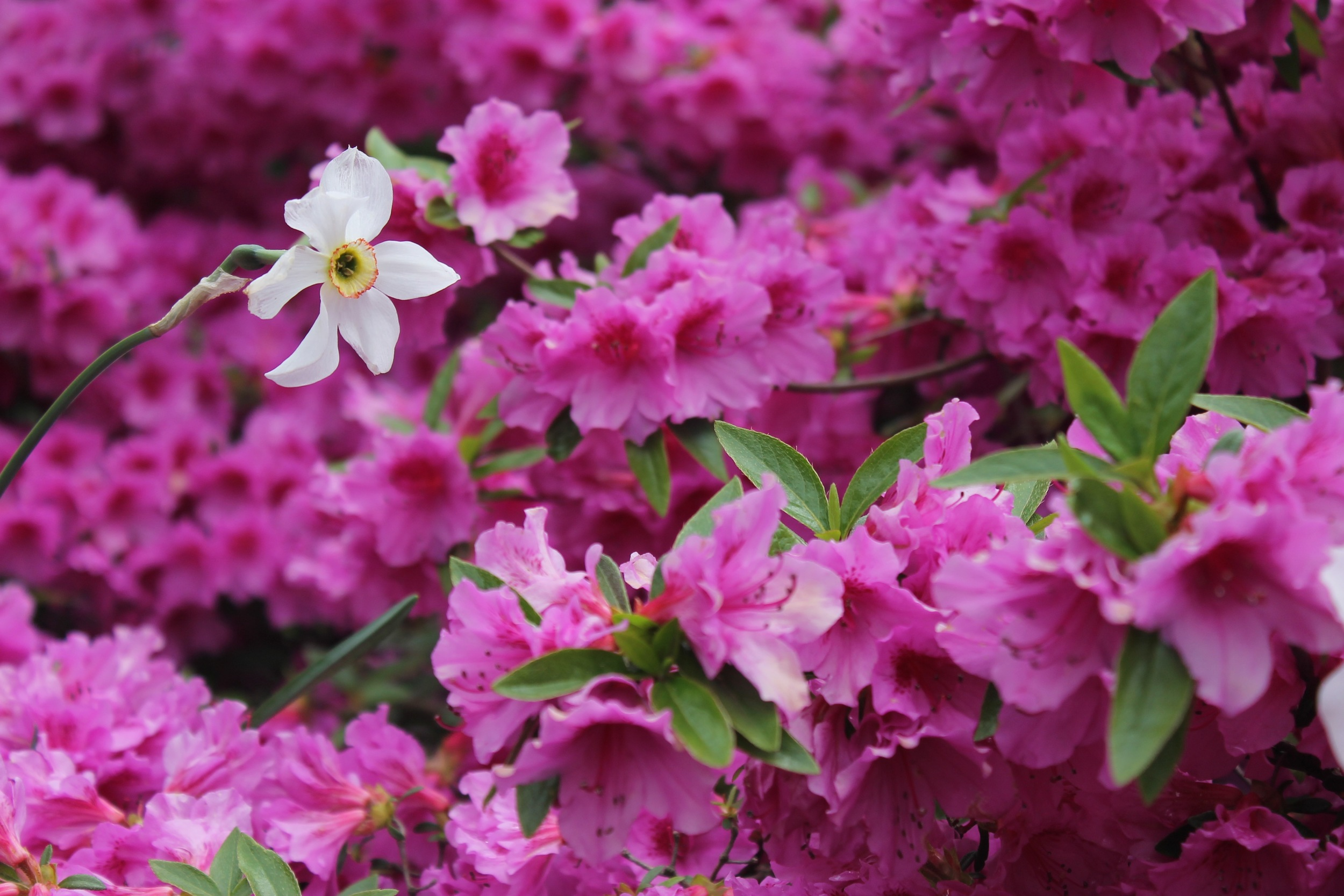 Fort Tryon Park flowers