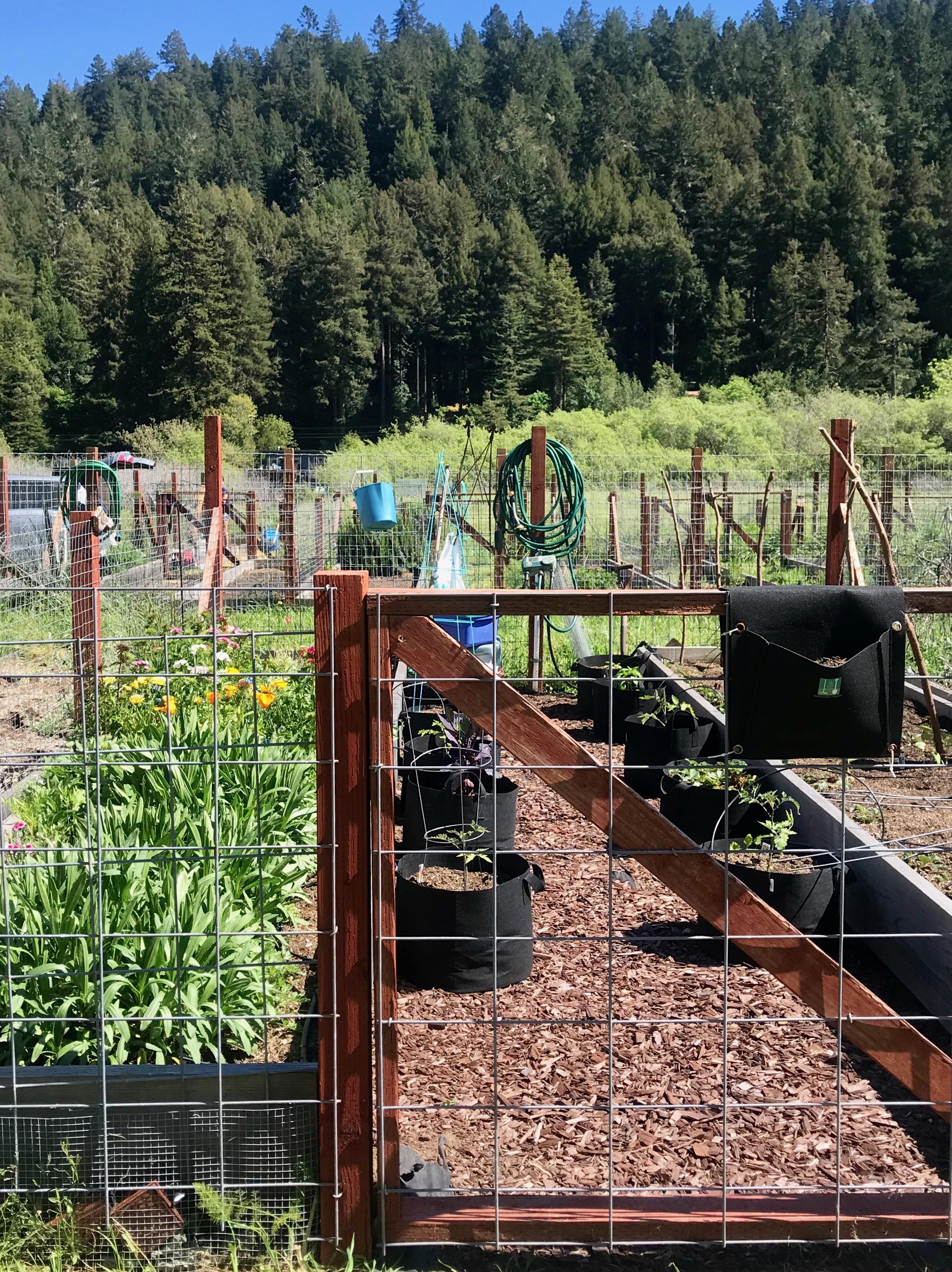 garden plot.jpeg