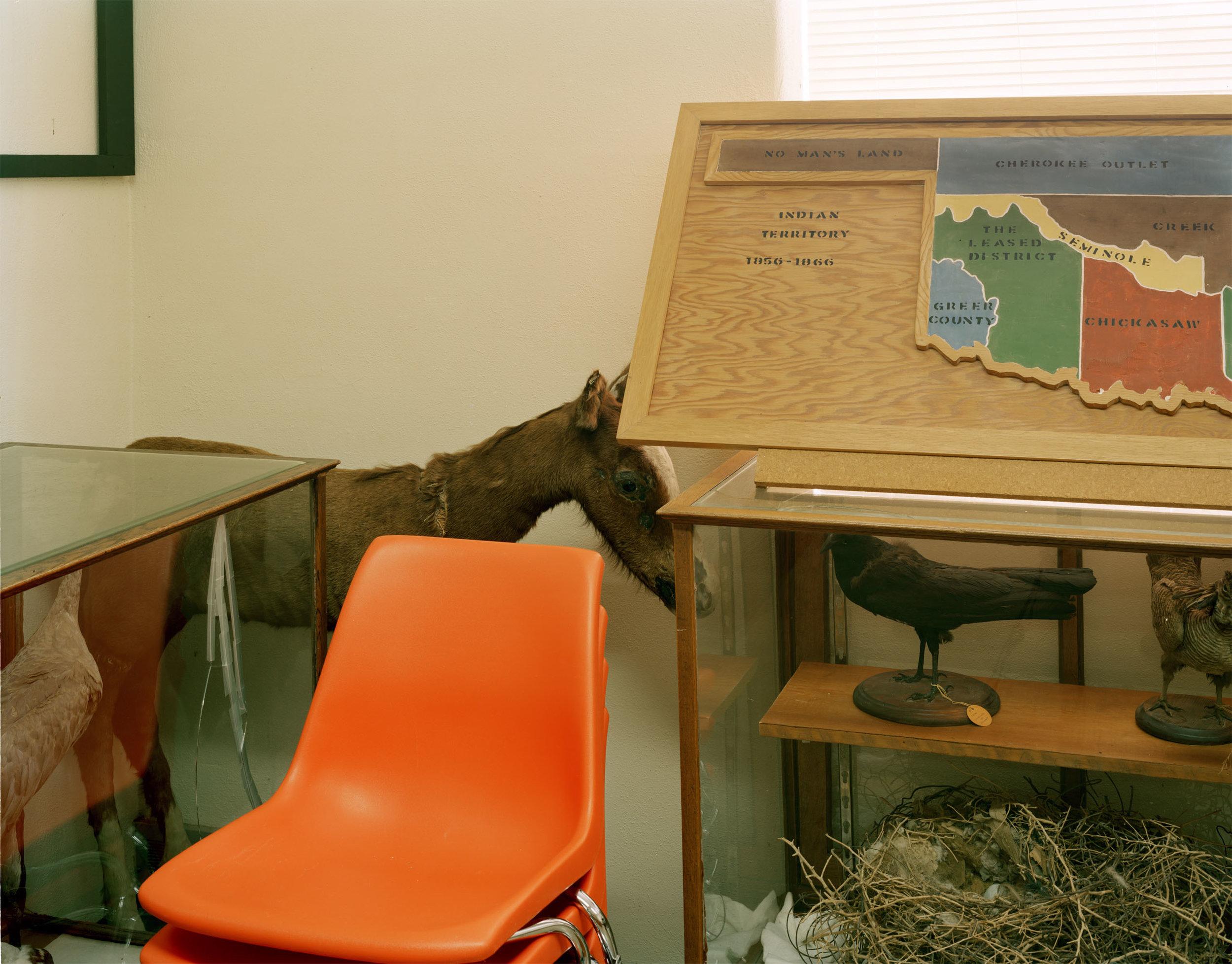 Corner Horse
