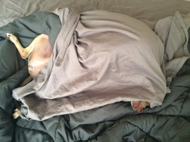 pistachio+bed.png