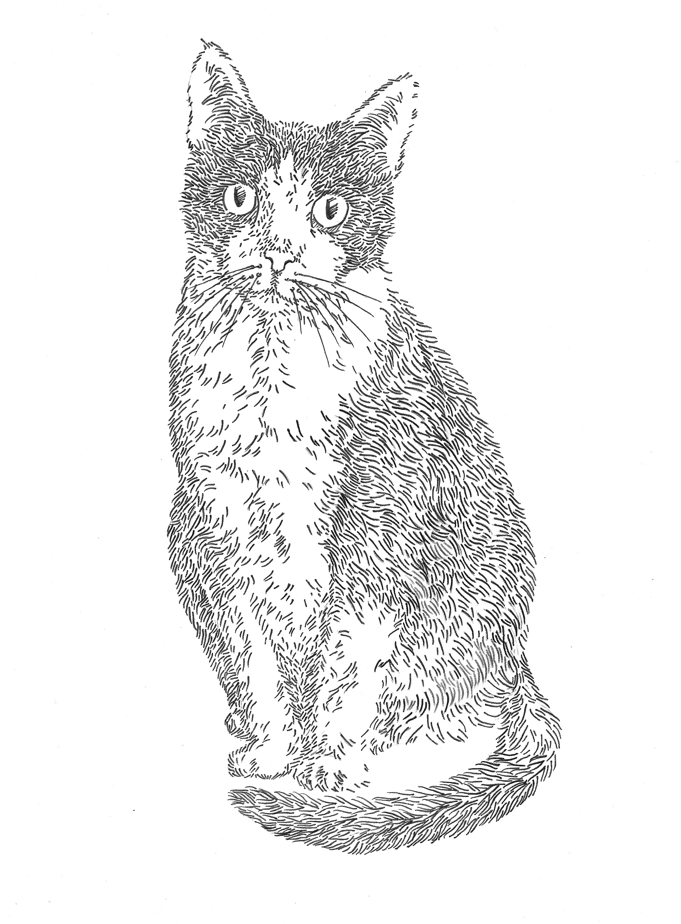Rue   Pen on Paper   Summer 2016  This piece was donated to the Cat Town Foster Art Show and went home with Rue at the time of her adoption.