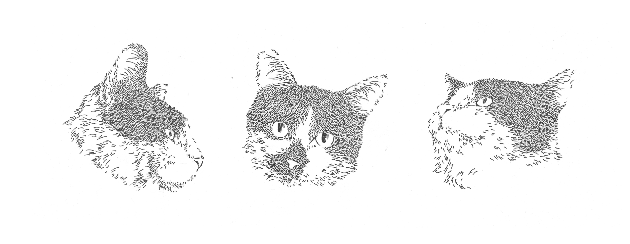 The Tuxedo Trio: Mig, Tilly, and Rav   Pen on Paper   Summer 2016  This piece was created to commemorate the first ever triple adoption from Cat Town