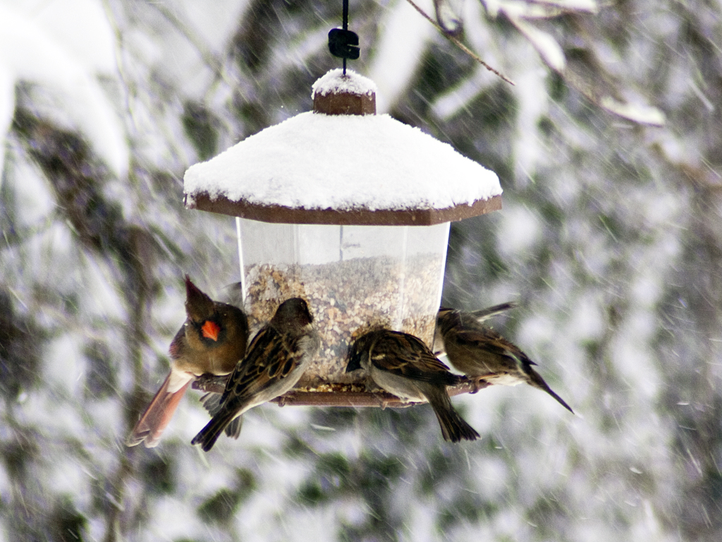 best-bird-feeders-for-winter-2.jpg