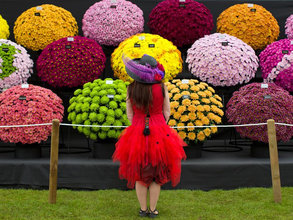 Phenne chelsea-flower-show-london