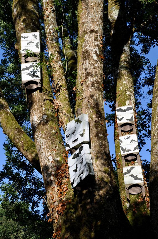 Ash Tree Bat Boxes