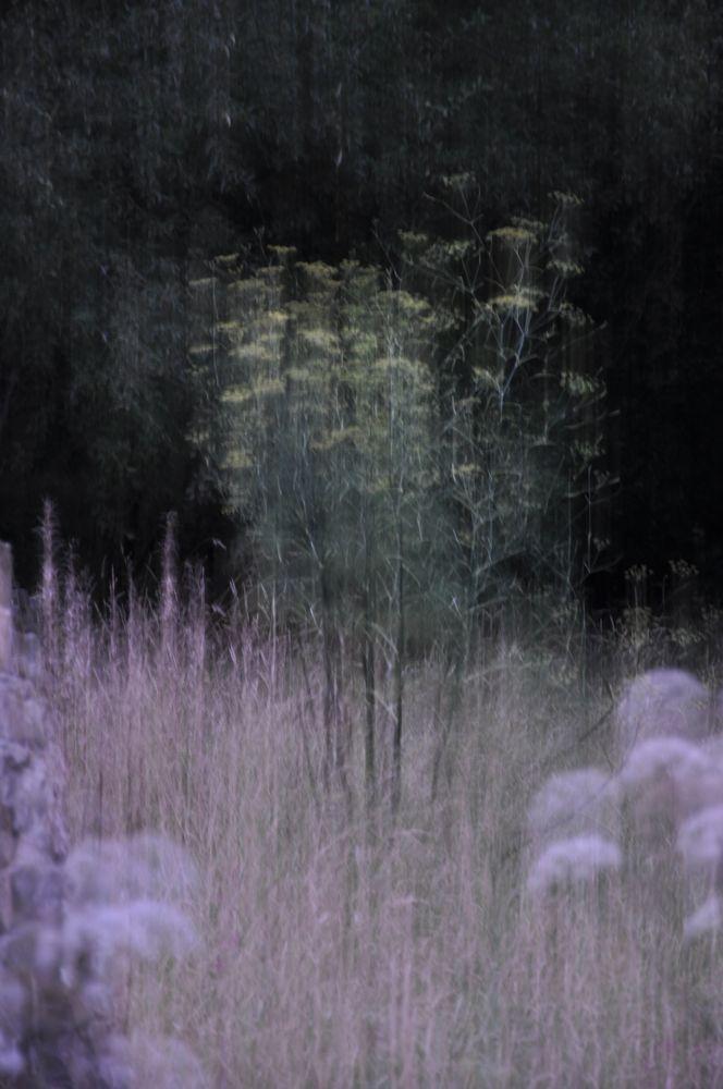 Dusk with Fennel.jpg