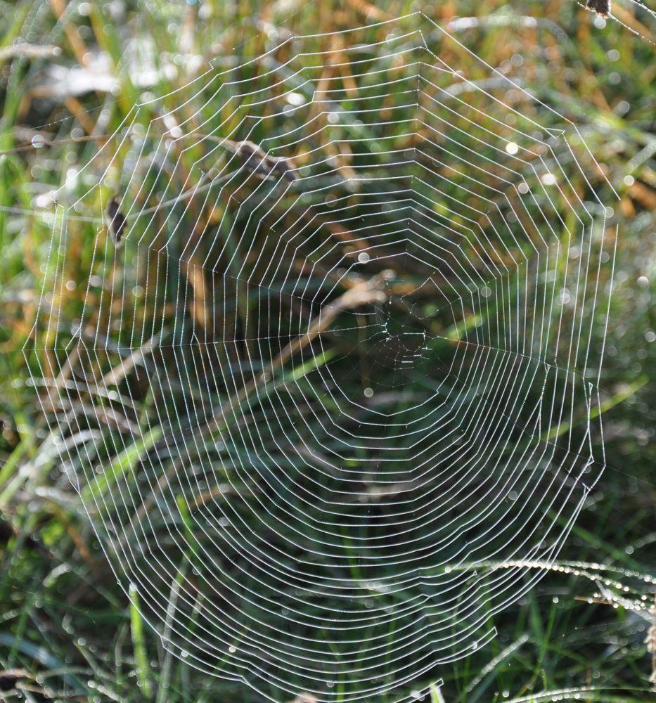 Orb Web.jpg