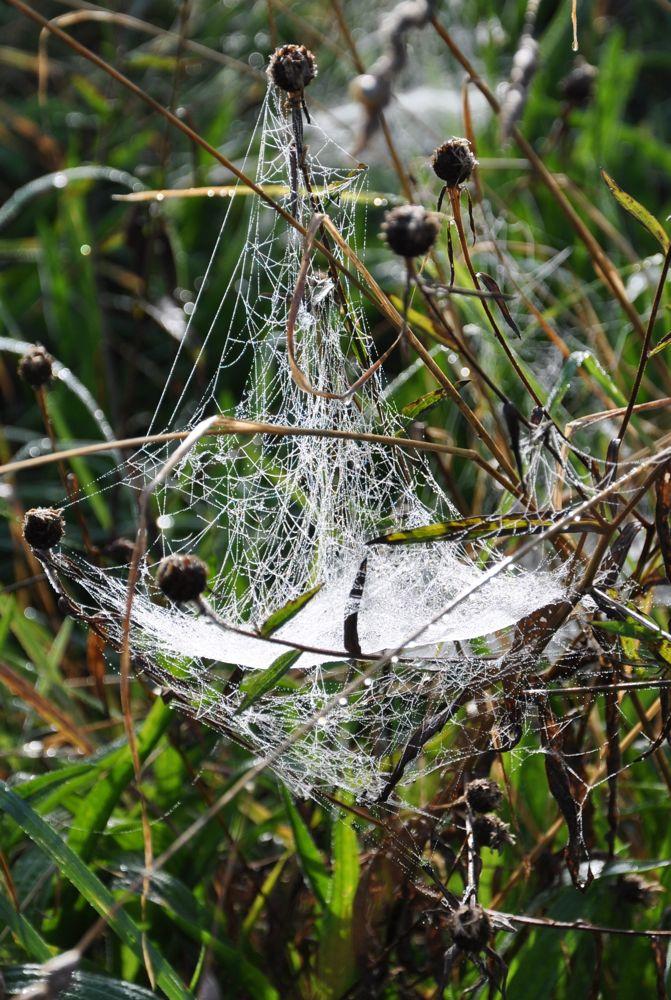 Hammock Web.jpg