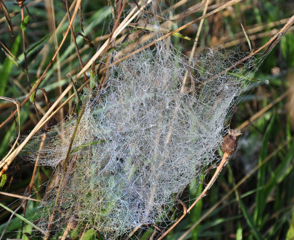 Veil Web.jpg