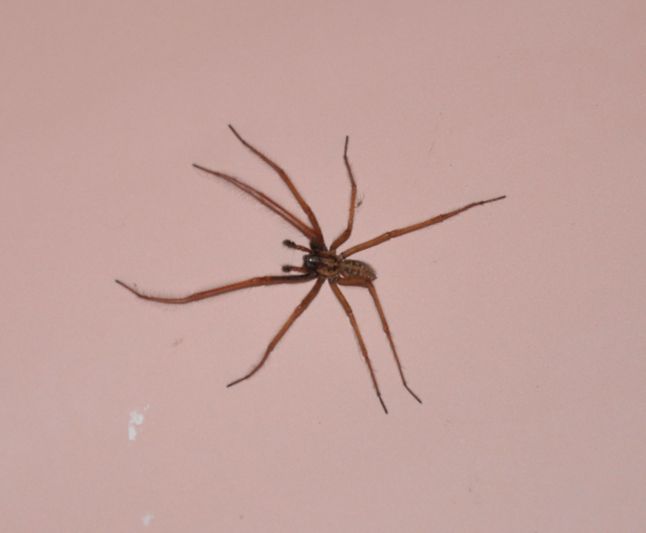 Spider in the Bath.jpg