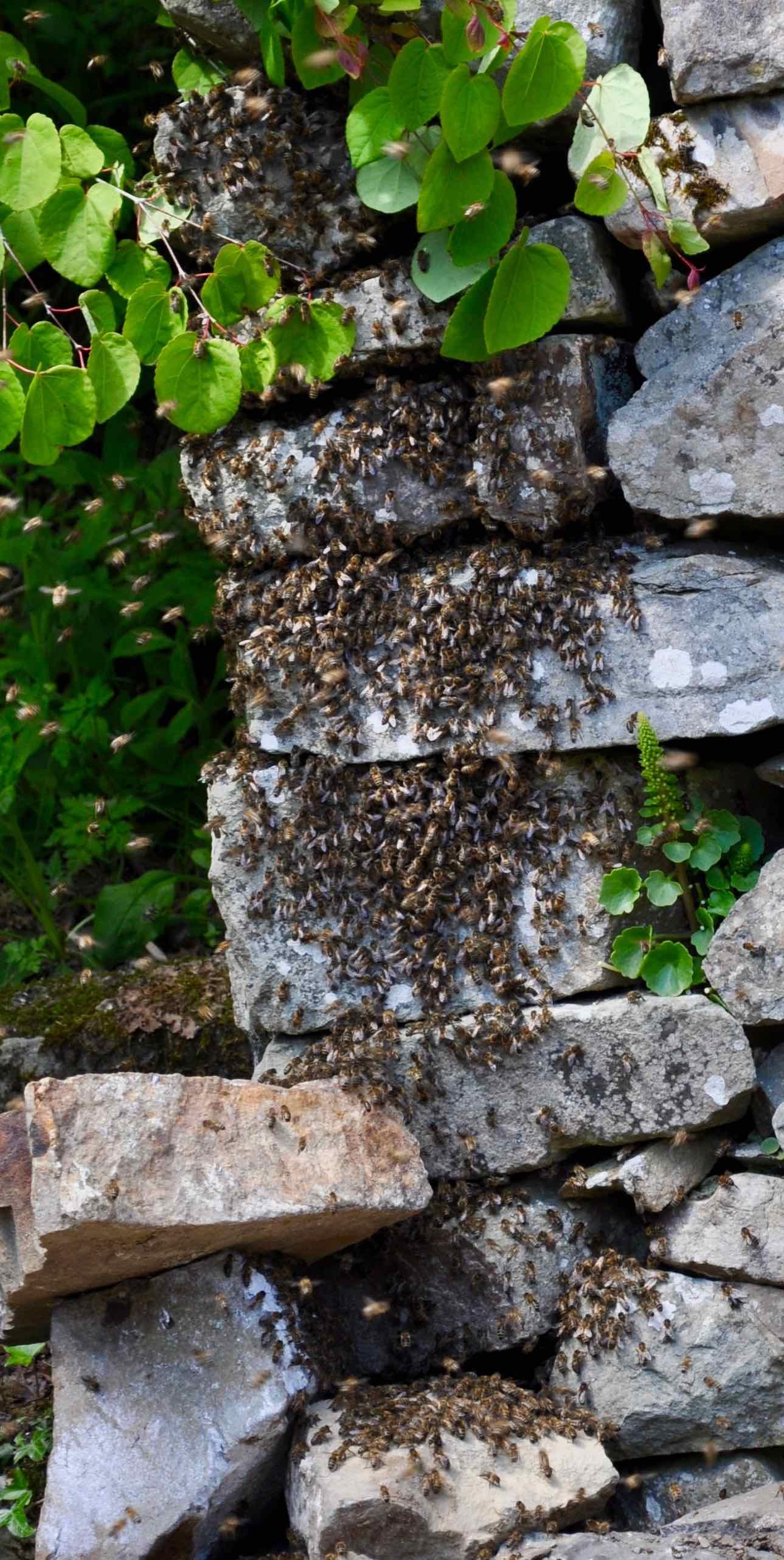 Stone Wall Swarm.jpg