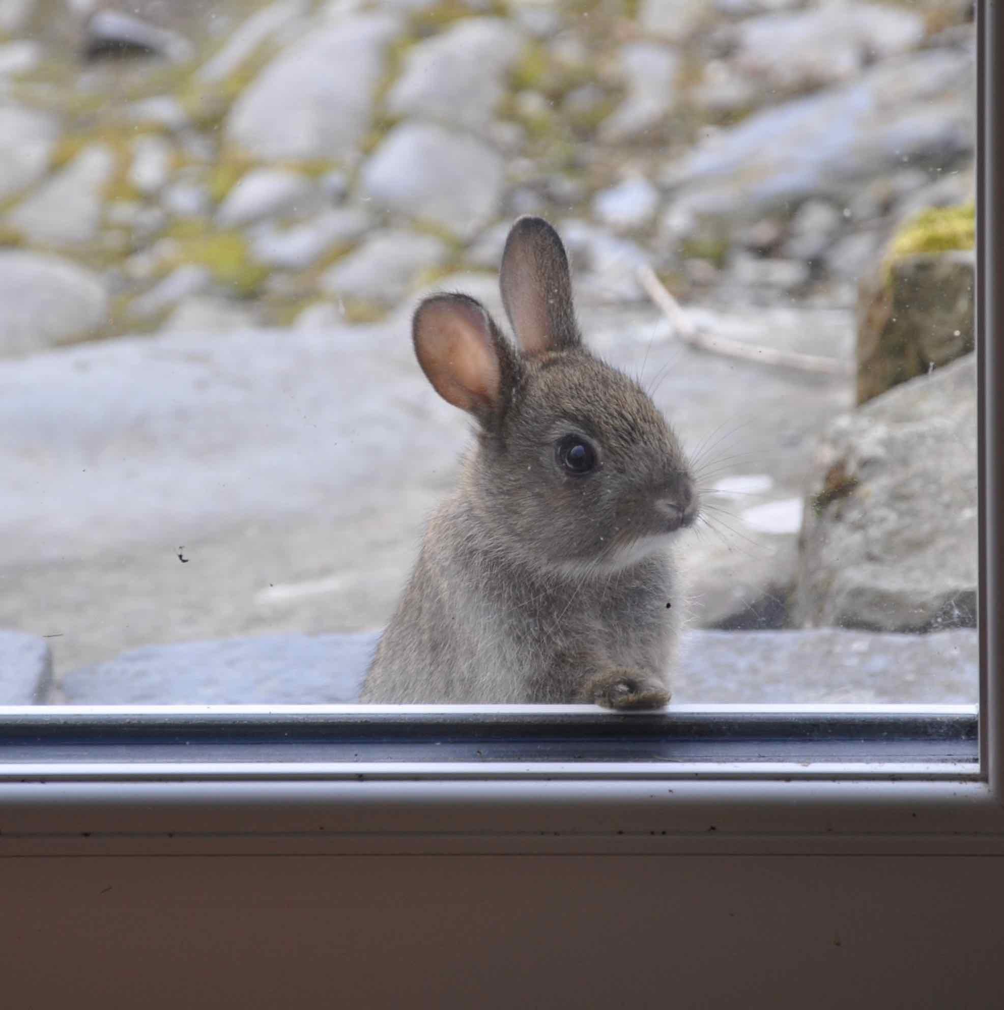 Rabbits (3).jpg