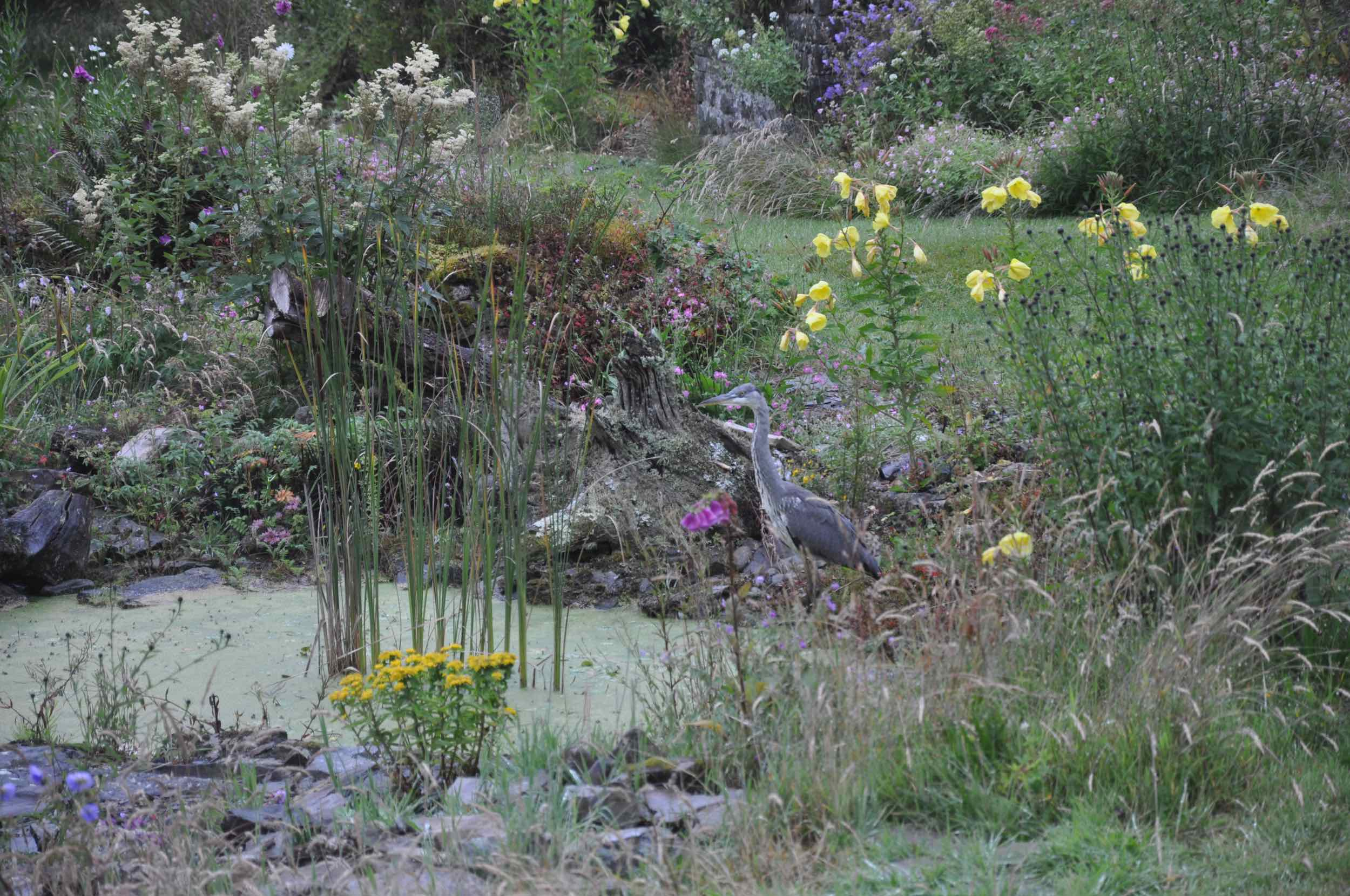 Heron on the Sheep Dip.jpg