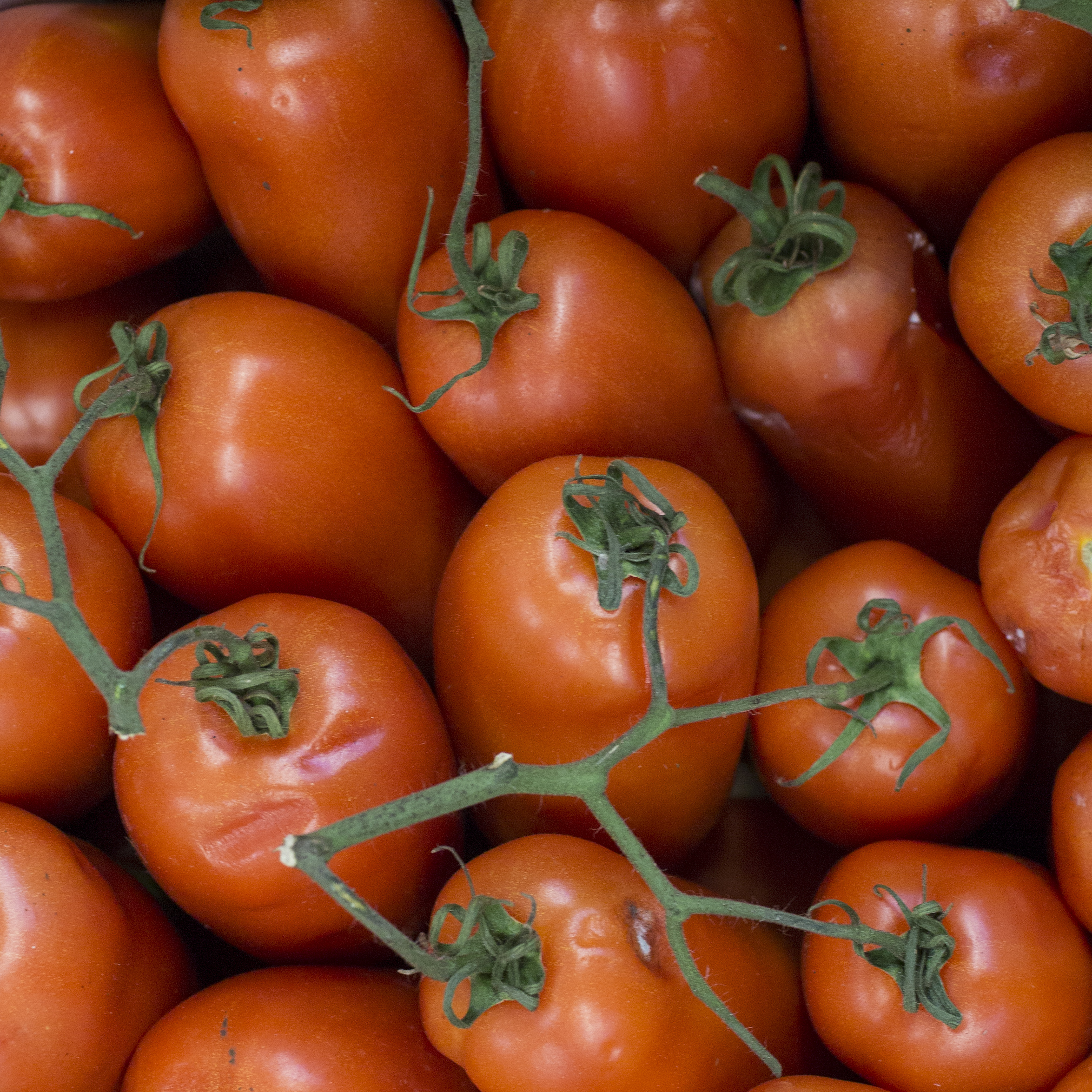European-Salad-Company-plum-tomatoes.jpg