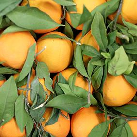 oranges-european-salad-company.jpg