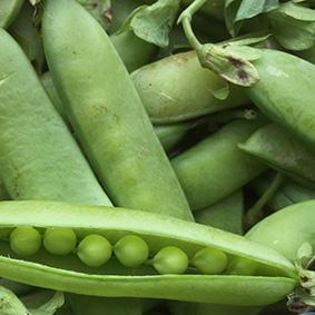 peas-european-salad-company.jpg