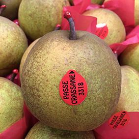 Passe Crassane pears at European Salad Company