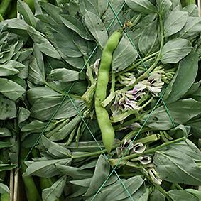 Broad beans at European Salad Company