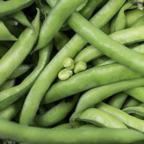 broad-beans-european-salad-company.jpg