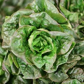 lettuce-european-salad-company.jpg