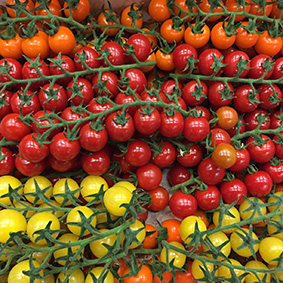tomatoes-european-salad-company.jpg