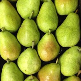 guyot-pears-european-salad-company.jpg