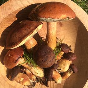 european-salad-company-wild-mushrooms.jpg
