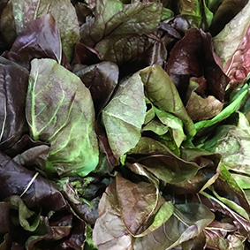 european-salad-company-chicory.jpg