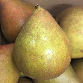 pears-european-salad-company.jpg
