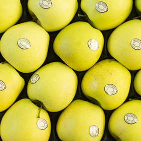 european-salad-company-apples.jpg