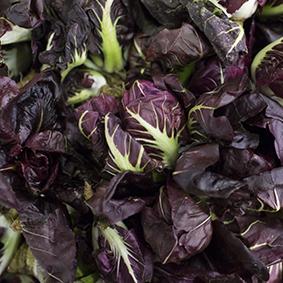 european-salad-company-radicchio.jpg