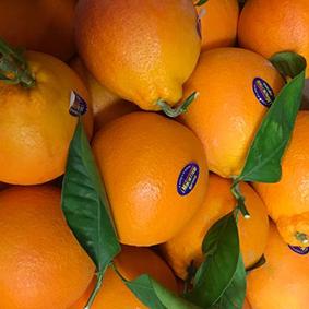 european-salad-company-clementines.jpg