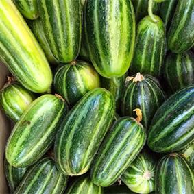 european-salad-company-cucumbers.jpg