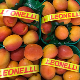 esc-apricots.jpg