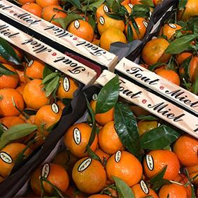 esc-clementines.jpg