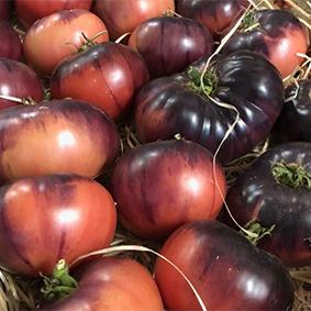 esc-tomatoes.jpg
