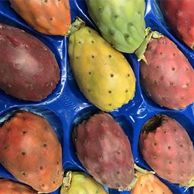 esc-prickly-pears.jpg
