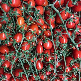 esc-tomatoes-milan.jpg