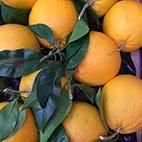 esc-oranges.jpg