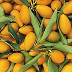 esc-kumquats.jpg
