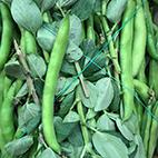 esc-broad-beans.jpg