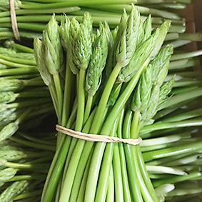 esc-wild-asparagus-2.5.19.jpg