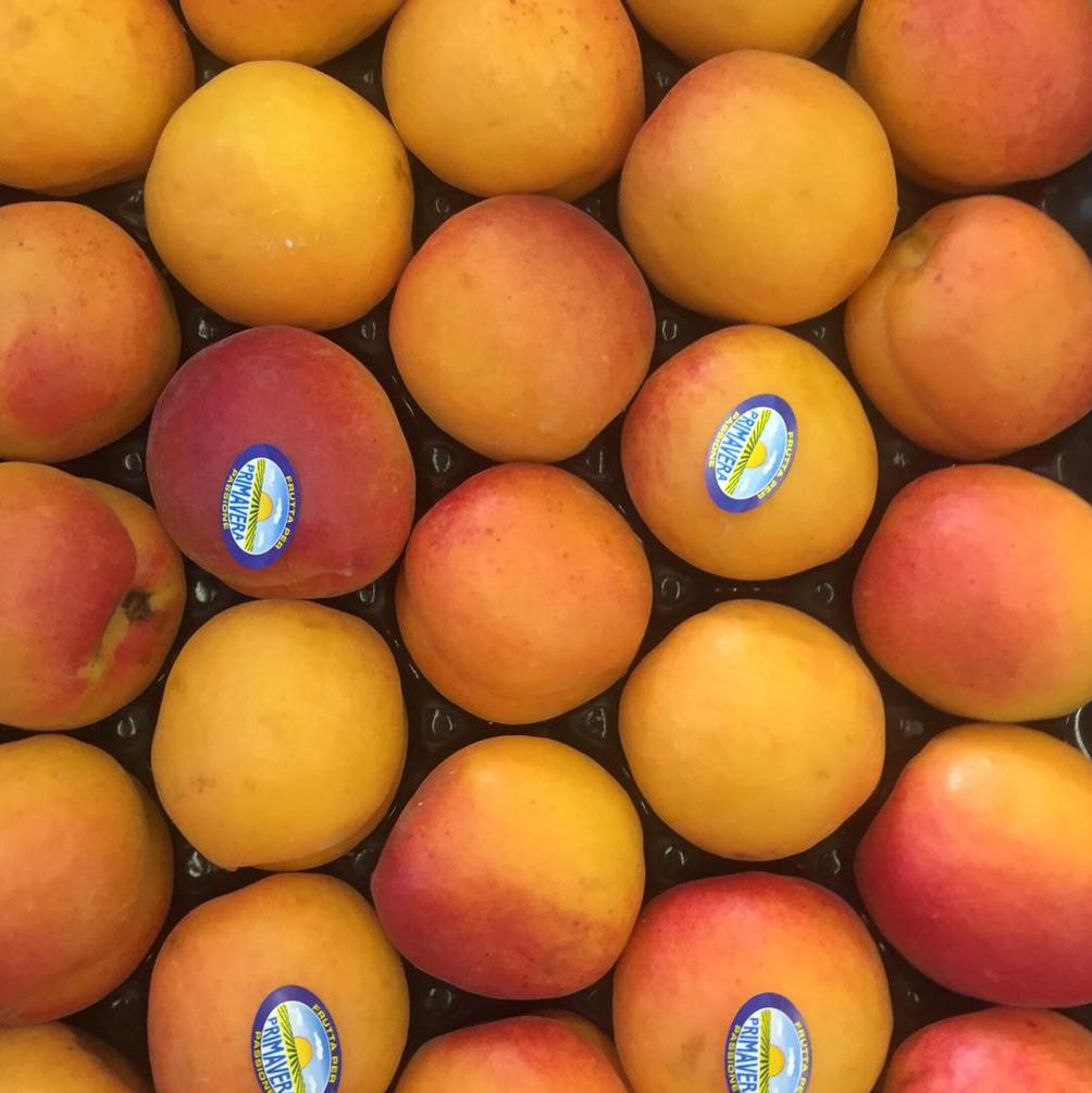 esc-apricots-9.5.19.jpg
