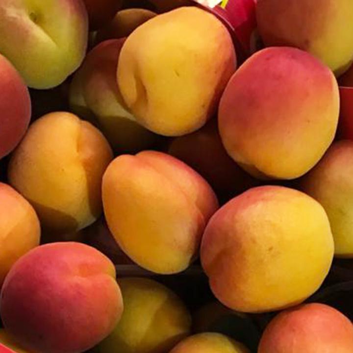 esc-apricots-16.5.19.jpg