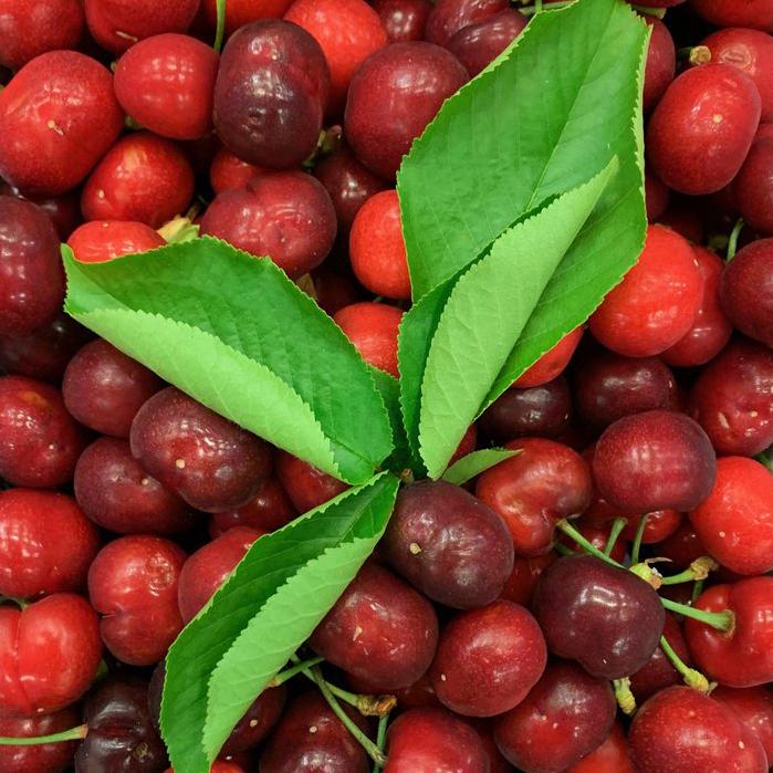 esc-cherries-9.5.19-v2.jpg
