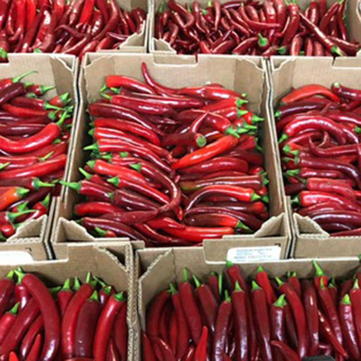 esc-red-chillies-7.6.19.jpg