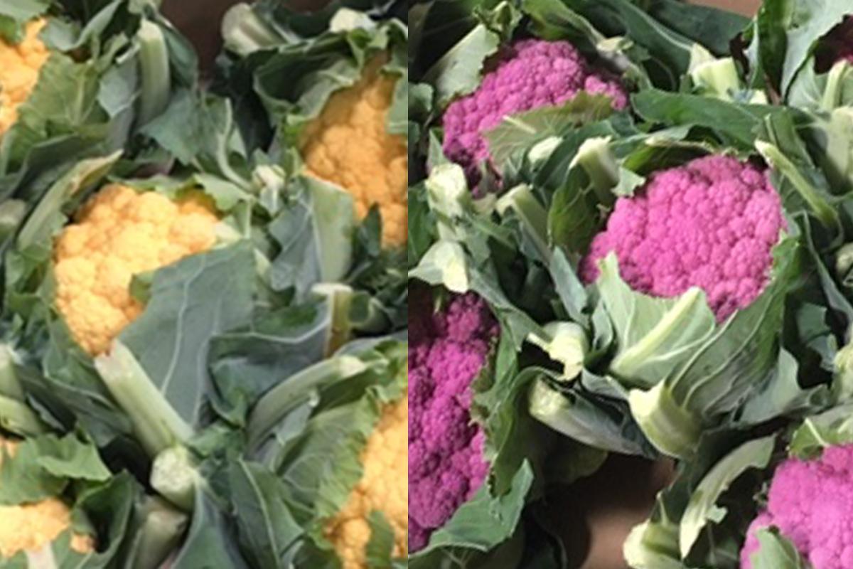 Purple, orange and yellow. - Sourced from France, these colours are higher in antioxidants than normal caulis. Green - a.k.a. alverda - also available.